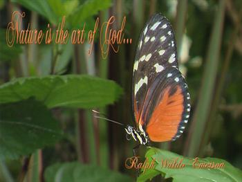 Nature Quote With Butterfly Free JPG