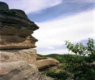 Nature, Rocks, Foliage