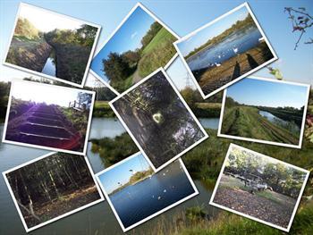 Nature Walk Collage Free JPG