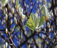 New Fresh Leaves