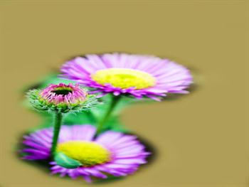 Nice Flower – Postcard Free JPG