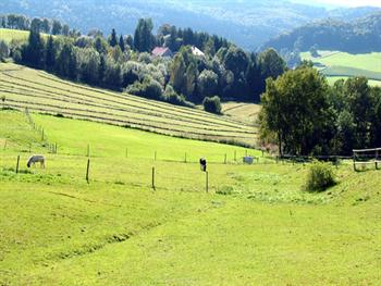 Pasture With Horses Free JPG