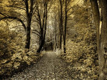 Path In The Woods Free JPG