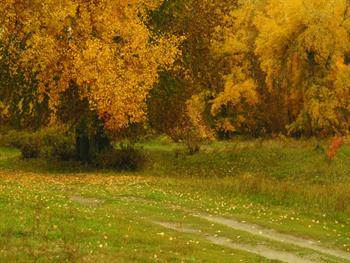 Pathway In The Autumn Forest Free JPG
