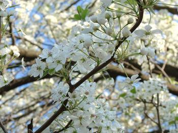 Pretty Little Flowers Free JPG