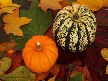 Pumpkins On Colorful Leaves Free JPG