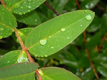 Rain Free JPG
