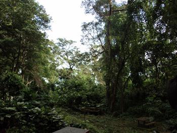 Rain Forest Park Free JPG