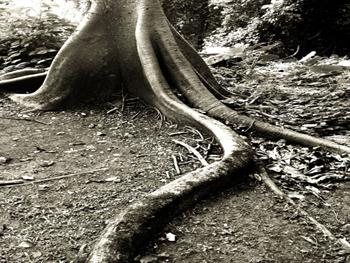 Rainforest Roots II