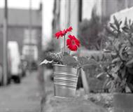 Red Flower On The Street