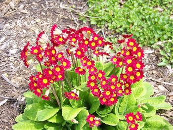 Red Flowers Free JPG