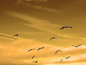 Seagulls Flying Free JPG