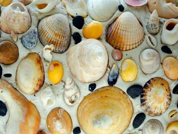 Shells – Background