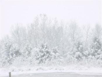 Snow Free JPG