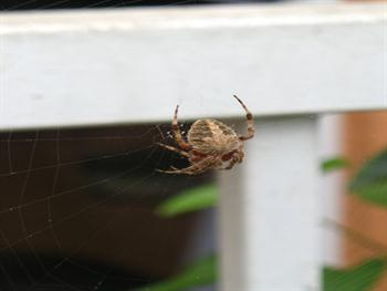 Spider In Its Web Free JPG