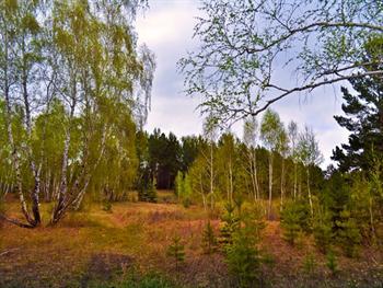Spring Forest Free JPG