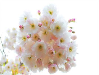 Spring Twig Free JPG
