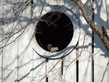 Squirrel In Window Free JPG