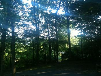 Sun Shining Through Trees 2 Free JPG