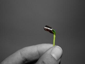 Sunflower Seed Free JPG