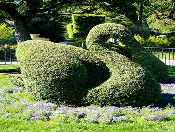 Swan Topiary Sculpture Free JPG