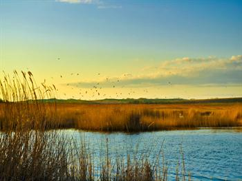 The Lake With The Birds Free JPG