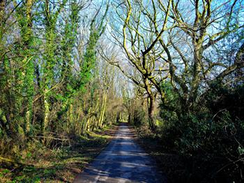The Path In The Woods Free JPG