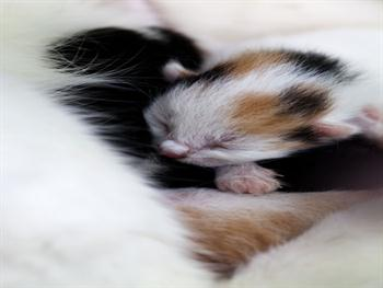 Tiny Kitten Free JPG