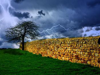 Tree And Storm Free JPG