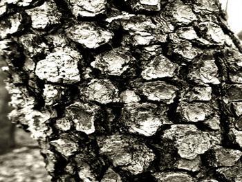 Tree Bark Study I Free JPG