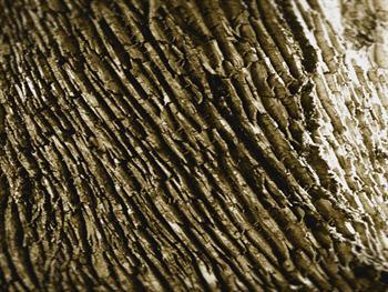 Tree Bark Study II Free JPG