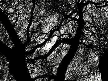 Tree Branch Free JPG