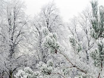 Tree In The Winter Free JPG