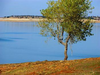 Tree On Lake 38 Free JPG