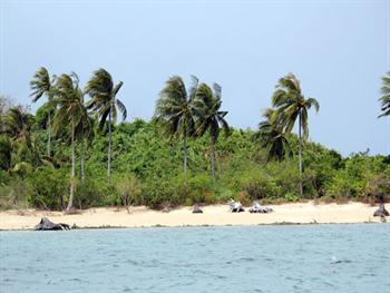 Tropical Island Free JPG