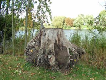 Uprooted Tree Stump Free JPG