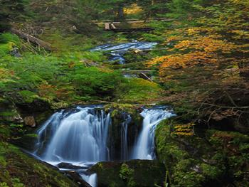 Waterfalls In The Forest Free JPG