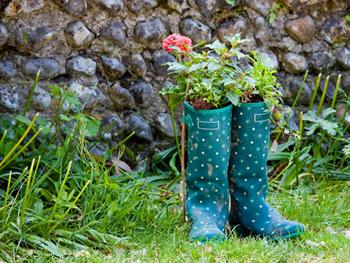 Wellington Boots & Flowers Free JPG