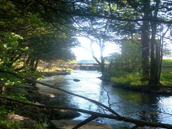 Where Brook Meets Lake Free JPG