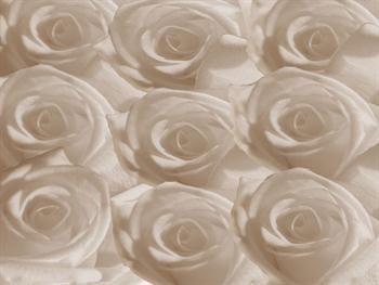 White Roses Free JPG