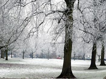 White Winter Park Free JPG