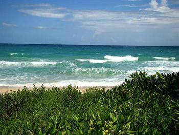 Wild Beach Free JPG