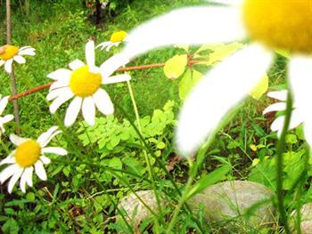 Wildflowers Free JPG