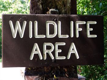 Wildlife Area Free JPG