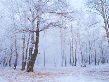 Winter Forest Free JPG