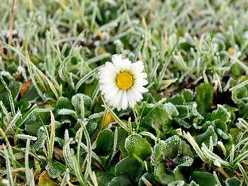 Winter Hoarfrost On A Flower Free JPG