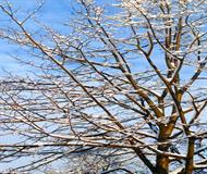 Winter Tree And Blue Sky