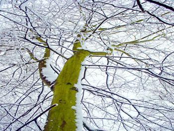 Winter Tree And Snow Free JPG