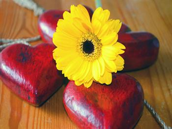 Yellow Flower And Red Heart Free JPG