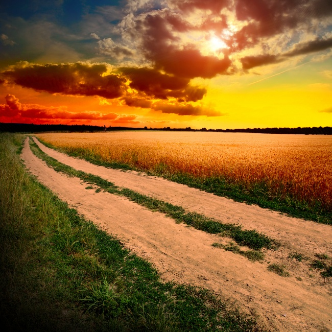 Cornfield road beautiful scenery pictures